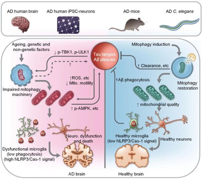 1-38 Το ΙΤΕ και διεθνή Ιδρύματα κατά της νόσου Αλτσχάιμερ