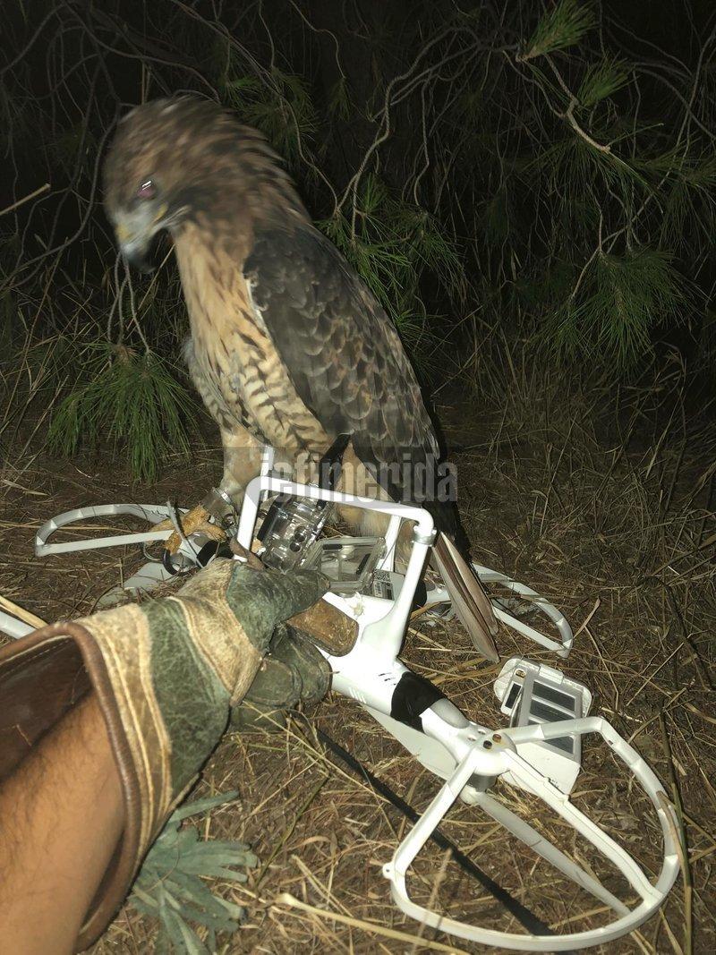 geraki-drone-agelopoulou-15-9-2019 Εκπαιδευμένο γεράκι κατέρριψε drone πάνω από την οικία της Γιάννας Αγγελοπούλου