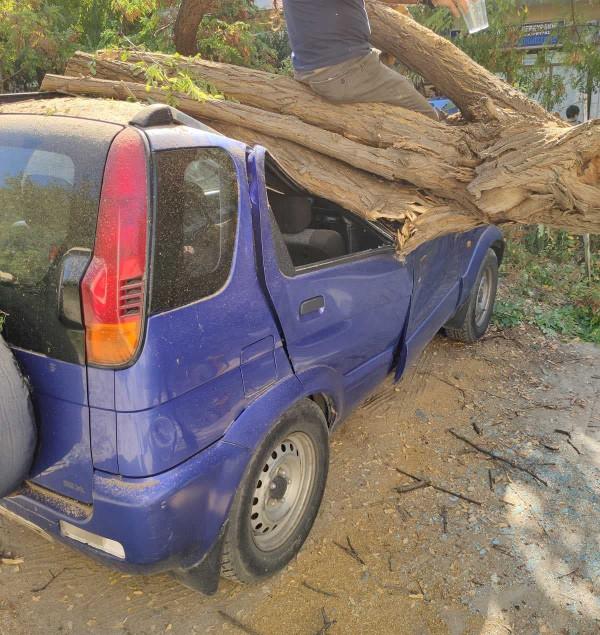 dentro-pano-se-autokinito Δέντρο έπεσε πάνω σε 4 αυτοκίνητα και προκάλεσε ζημιές [εικόνες]